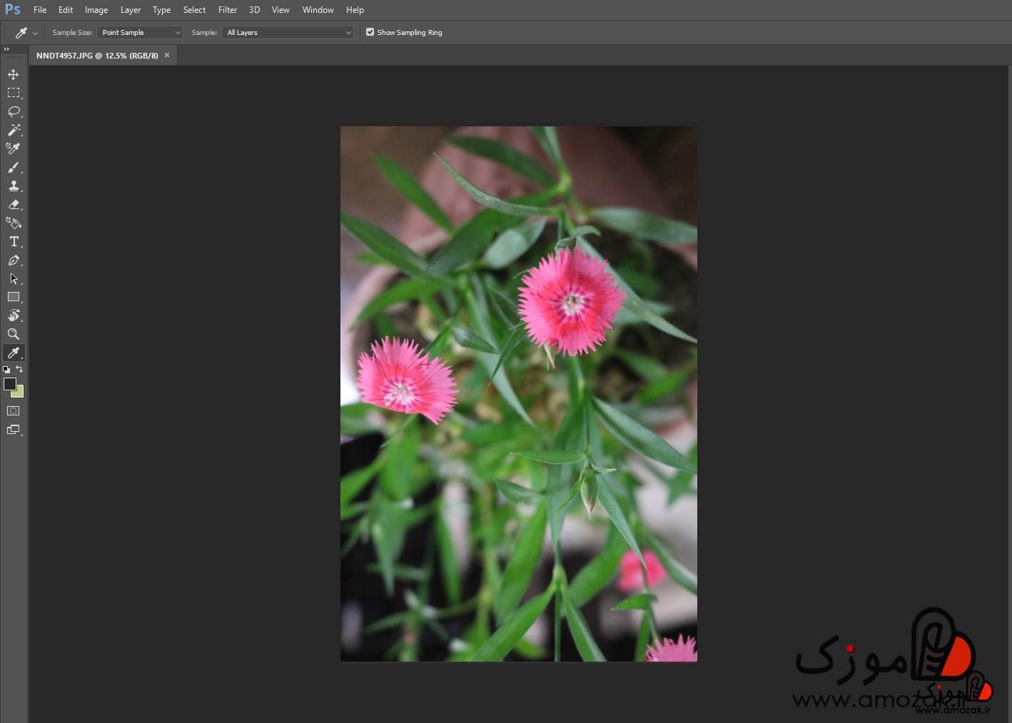 تصویر نحوه چرخاندن و تغییر زاویه عکس و  متن در فتوشاپ(Photoshop)