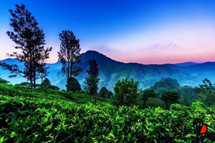 نوارا ایلیا ، تور سریلانکا برای سفر در تابستان مناسب است؟